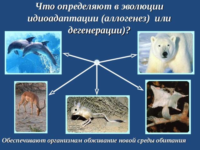 Что определяют в эволюции идиоадаптации (аллогенез) или дегенерации)? Обеспечивают организмам обживание новой среды обитания