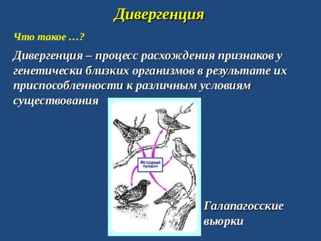 Дивергенция Что такое …? Дивергенция – процесс расхождения признаков у генетически близких организмов в результате их приспособленности к различным условиям существования Галапагосские вьюрки
