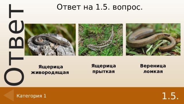 Ответ на 1.5. вопрос. Ящерица прыткая Вереница ломкая Ящерица живородящая 1.5. Категория 1