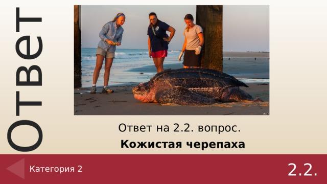 Ответ на 2.2. вопрос. Кожистая черепаха Категория 2 2.2.
