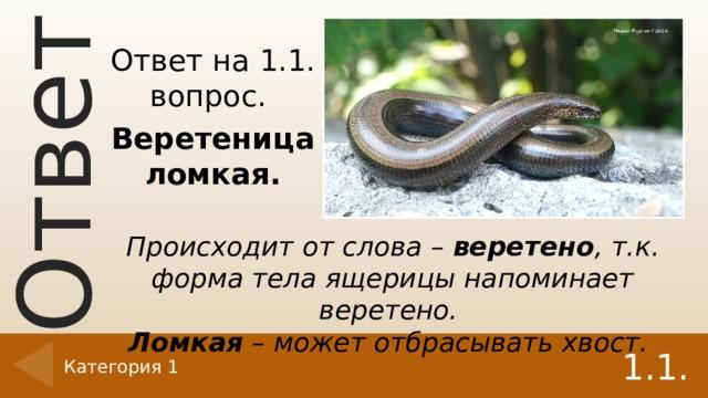 Ответ на 1.1. вопрос. Веретеница ломкая. Происходит от слова – веретено , т.к. форма тела ящерицы напоминает веретено. Ломкая – может отбрасывать хвост. 1.1. Категория 1