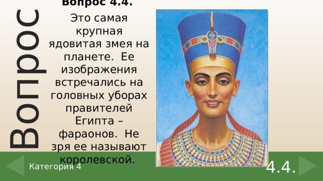 Вопрос 4.4. Это самая крупная ядовитая змея на планете. Ее изображения встречались на головных уборах правителей Египта – фараонов. Не зря ее называют королевской. 4.4. Категория 4