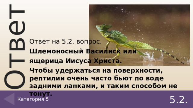 Ответ на 5.2. вопрос. Шлемоносный Василиск или ящерица Иисуса Христа. Чтобы удержаться на поверхности, рептилии очень часто бьют по воде задними лапками, и таким способом не тонут. Категория 5 5.2.