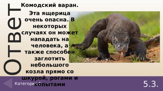 Ответ на 5.3. вопрос. Комодский варан. Эта ящерица очень опасна. В некоторых случаях он может нападать на человека, а также способен заглотить небольшого козла прямо со шкурой, рогами и копытами Категория 5 5.3.