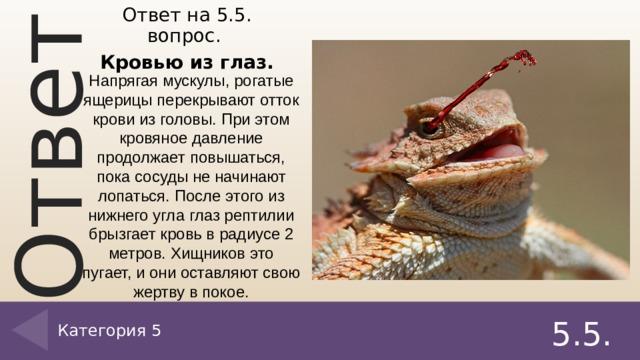 Ответ на 5.5. вопрос. Кровью из глаз. Напрягая мускулы, рогатые ящерицы перекрывают отток крови из головы. При этом кровяное давление продолжает повышаться, пока сосуды не начинают лопаться. После этого из нижнего угла глаз рептилии брызгает кровь в радиусе 2 метров. Хищников это пугает, и они оставляют свою жертву в покое. 5.5. Категория 5