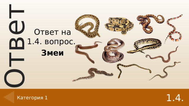 Ответ на 1.4. вопрос. Змеи 1.4. Категория 1
