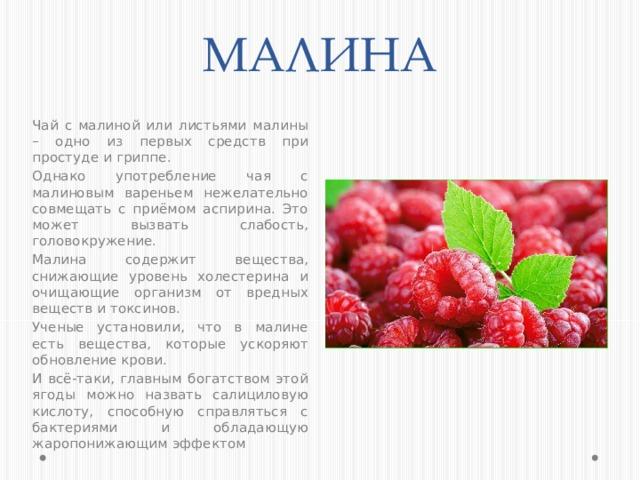 МАЛИНА Чай с малиной или листьями малины – одно из первых средств при простуде и гриппе. Однако употребление чая с малиновым вареньем нежелательно совмещать с приёмом аспирина. Это может вызвать слабость, головокружение. Малина содержит вещества, снижающие уровень холестерина и очищающие организм от вредных веществ и токсинов. Ученые установили, что в малине есть вещества, которые ускоряют обновление крови. И всё-таки, главным богатством этой ягоды можно назвать салициловую кислоту, способную справляться с бактериями и обладающую жаропонижающим эффектом