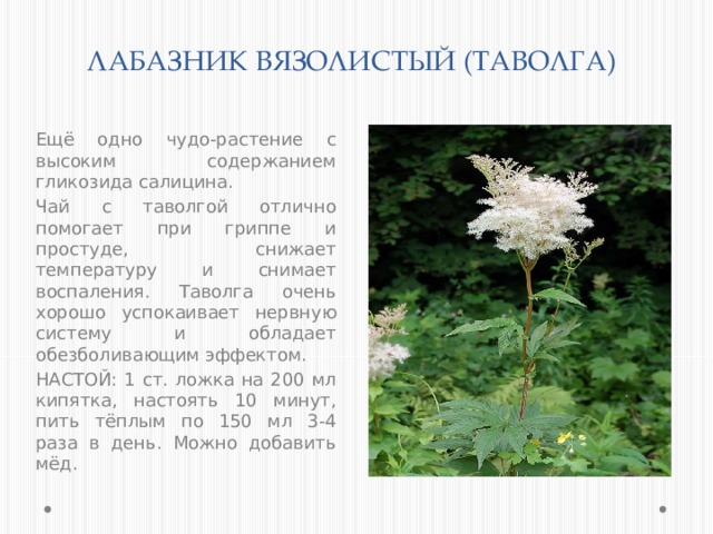 ЛАБАЗНИК ВЯЗОЛИСТЫЙ (ТАВОЛГА) Ещё одно чудо-растение с высоким содержанием гликозида салицина. Чай с таволгой отлично помогает при гриппе и простуде, снижает температуру и снимает воспаления. Таволга очень хорошо успокаивает нервную систему и обладает обезболивающим эффектом. НАСТОЙ: 1 ст. ложка на 200 мл кипятка, настоять 10 минут, пить тёплым по 150 мл 3-4 раза в день. Можно добавить мёд.