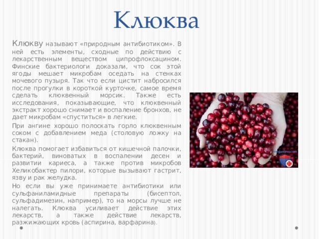 Клюква Клюкву  называют «природным антибиотиком». В ней есть элементы, сходные по действию с лекарственным веществом ципрофлоксацином. Финские бактериологи доказали, что сок этой ягоды мешает микробам оседать на стенках мочевого пузыря. Так что если цистит набросился после прогулки в короткой курточке, самое время сделать клюквенный морсик. Также есть исследования, показывающие, что клюквенный экстракт хорошо снимает и воспаление бронхов, не дает микробам «спуститься» в легкие. При ангине хорошо полоскать горло клюквенным соком с добавлением меда (столовую ложку на стакан). Клюква помогает избавиться от кишечной палочки, бактерий, виноватых в воспалении десен и развитии кариеса, а также против микробов Хеликобактер пилори, которые вызывают гастрит, язву и рак желудка. Но если вы уже принимаете антибиотики или сульфаниламидные препараты (бисептол, сульфадимезин, например), то на морсы лучше не налегать. Клюква усиливает действие этих лекарств, а также действие лекарств, разжижающих кровь (аспирина, варфарина ).