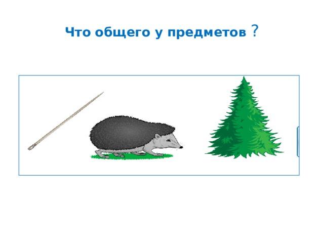 Что общего у предметов ?