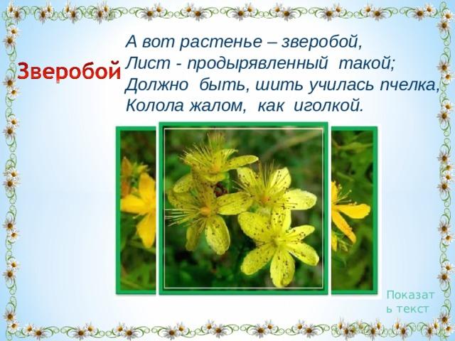 А вот растенье – зверобой,  Лист- продырявленныйтакой;  Должнобыть,шить училась пчелка,  Колола жалом,какиголкой. Показать текст