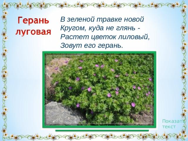 В зеленой травке новой  Кругом, куда не глянь -  Растет цветок лиловый,  Зовут его герань. Показать текст