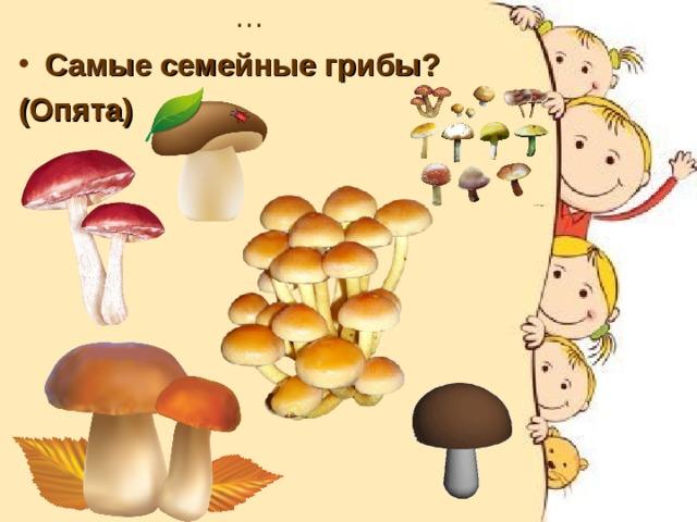 … Самые семейные грибы? (Опята)
