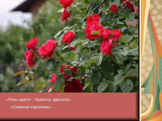«Розы цветут…Красота, красота ! »  «Снежная королева».