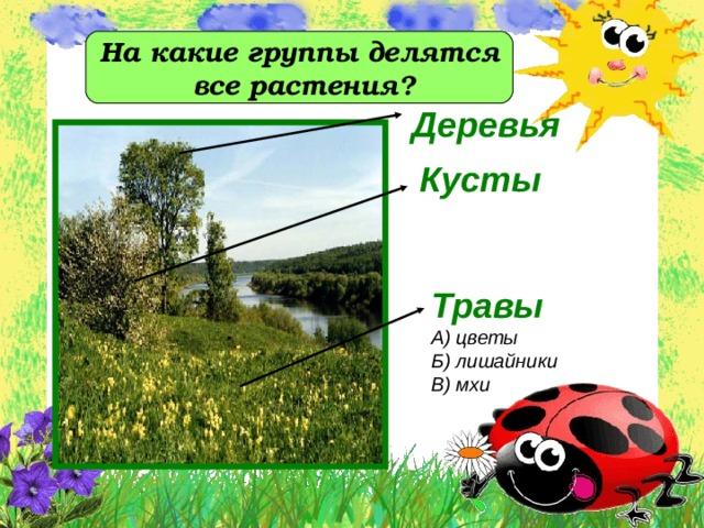 На какие группы делятся  все растения?  Деревья  Кусты   Травы А) цветы Б) лишайники В) мхи