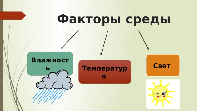 Факторы среды Влажность  Свет  Температура