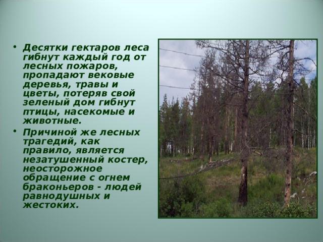 Десятки гектаров леса гибнут каждый год от лесных пожаров, пропадают вековые деревья, травы и цветы, потеряв свой зеленый дом гибнут птицы, насекомые и животные. Причиной же лесных трагедий, как правило, является незатушенный костер, неосторожное обращение с огнем браконьеров - людей равнодушных и жестоких.