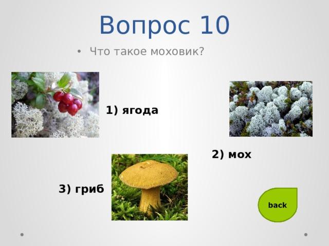 Вопрос 10 Что такое моховик? 1) ягода 2) мох 3) гриб