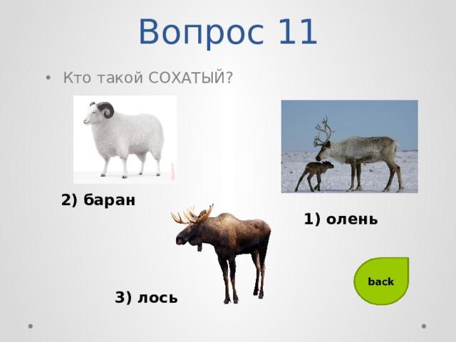 Вопрос 11 Кто такой СОХАТЫЙ? 2) баран 1) олень 3) лось