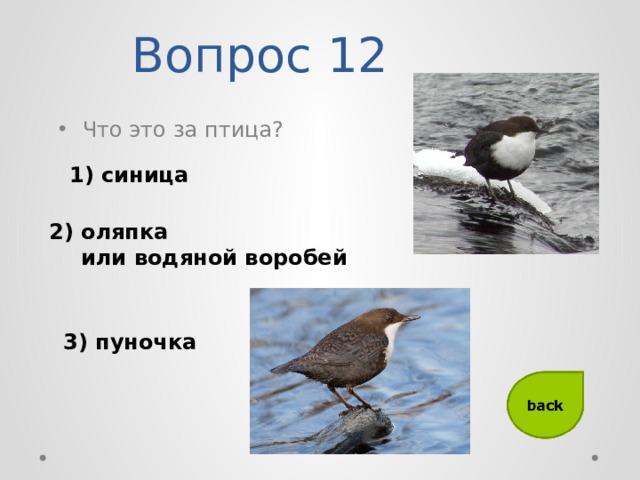 Вопрос 12 Что это за птица? 1) синица 2) оляпка  или водяной воробей 3) пуночка
