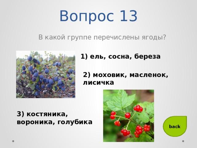 Вопрос 13 В какой группе перечислены ягоды? 1) ель, сосна, береза 2) моховик, масленок, лисичка 3) костяника, вороника, голубика