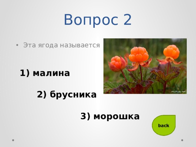 Вопрос 2 Эта ягода называется 1) малина 2) брусника 3) морошка