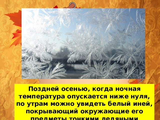 Поздней осенью, когда ночная температура опускается ниже нуля, по утрам можно увидеть белый иней, покрывающий окружающие его предметы тонкими ледяными кристалликами.