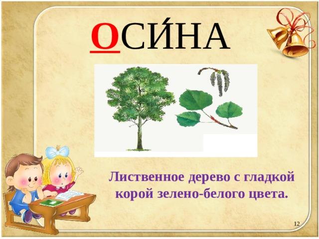 О СИ ́ НА Лиственное дерево с гладкой корой зелено-белого цвета.