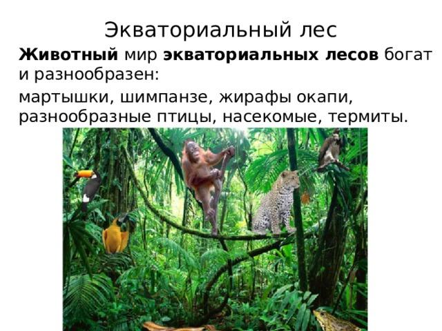 Экваториальный лес    Животный мир экваториальных  лесов богат и разнообразен:  мартышки, шимпанзе, жирафы окапи, разнообразные птицы, насекомые, термиты.