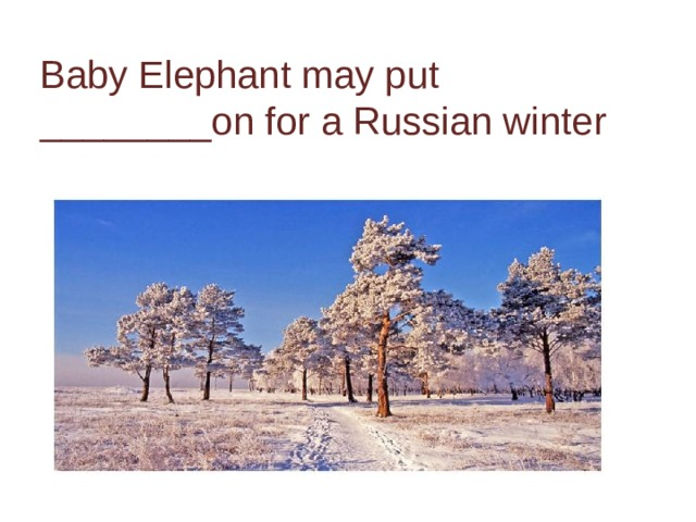 Baby Elephant may put ________on for a Russian winter