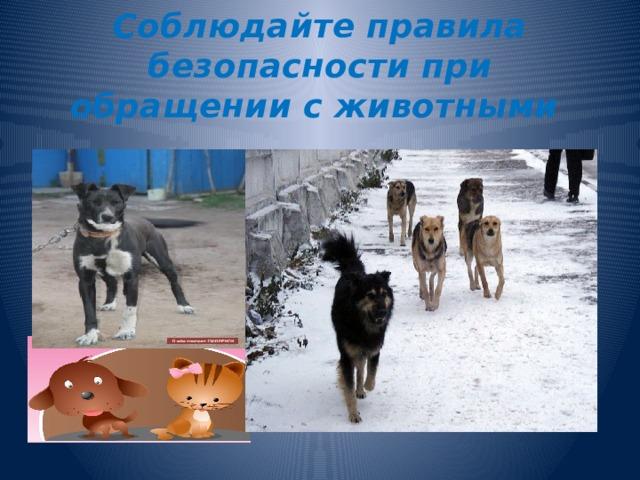 Соблюдайте правила безопасности при обращении с животными