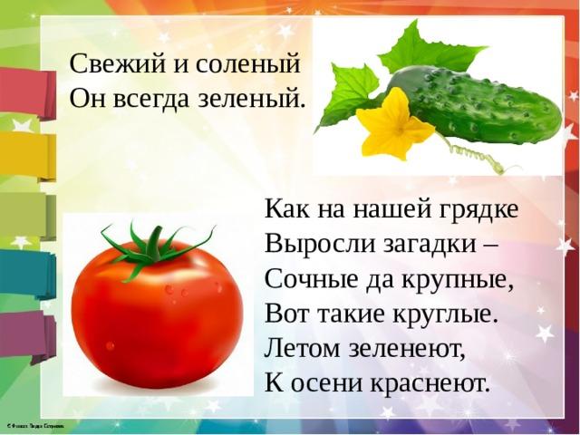 Свежий и соленый Он всегда зеленый.    Как на нашей грядке  Выросли загадки –  Сочные да крупные,  Вот такие круглые.  Летом зеленеют,  К осени краснеют.