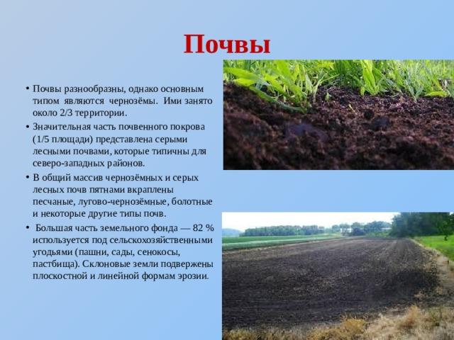 Почвы