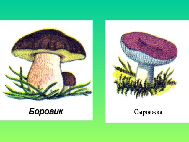 съедобные и несъедобные грибы 5 класс