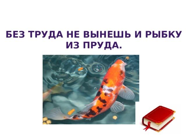 Без труда не вынешь и рыбку из пруда.