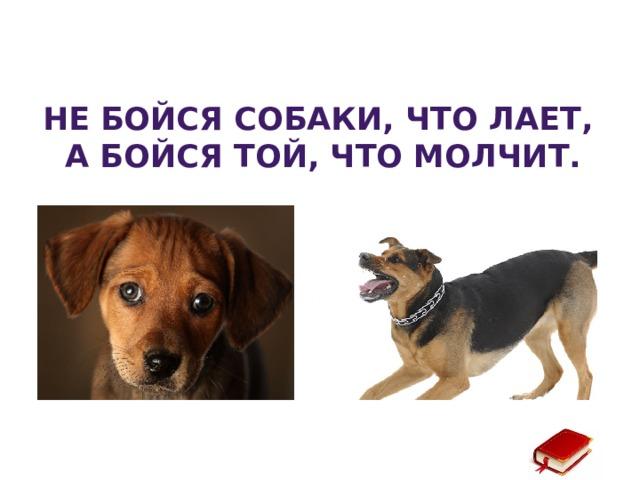 Не бойся собаки, что лает, а бойся той, что молчит.