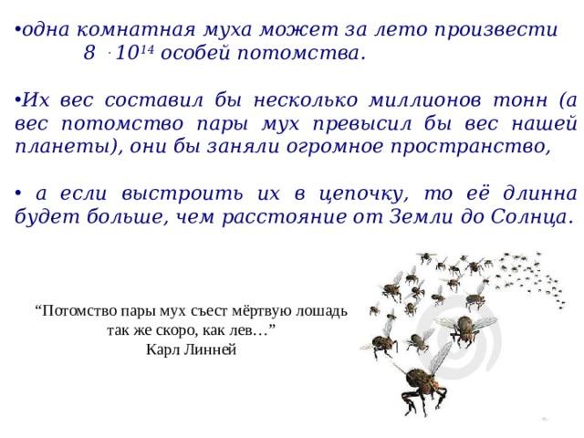 одна комнатная муха может за лето произвести 8  . 10 14  особей потомства.  Их вес составил бы несколько миллионов тонн (а вес потомство пары мух превысил бы вес нашей планеты), они бы заняли огромное пространство,   а если выстроить их в цепочку, то её длинна будет больше, чем расстояние от Земли до Солнца.