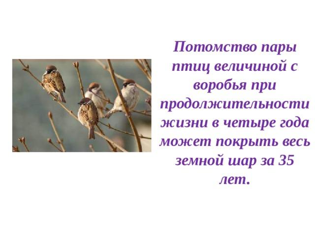 Потомство пары птиц величиной с воробья при продолжительности жизни в четыре года может покрыть весь земной шар за 35 лет.