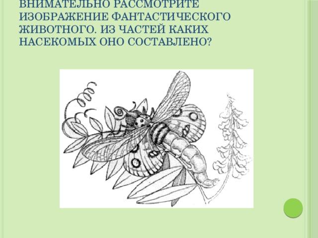 Внимательно рассмотрите изображение фантастического животного. Из частей каких насекомых оно составлено?