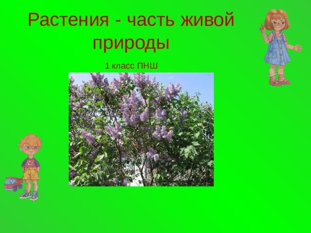 Растения - часть живой  природы   1 класс ПНШ
