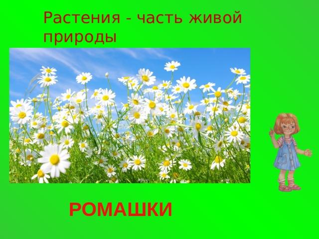 Растения - часть живой природы РОМАШКИ