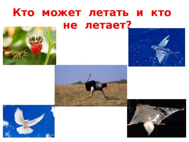 Кто может летать и кто не летает?