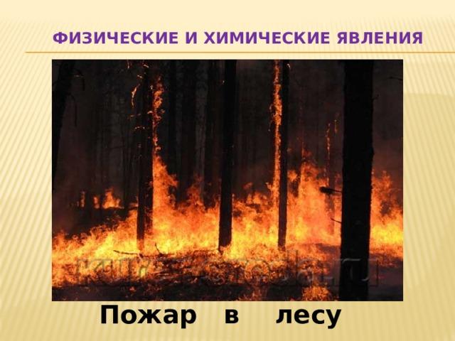 Физические и химические явления Пожар в лесу