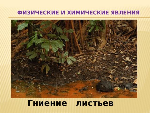 Физические и химические явления Гниение листьев