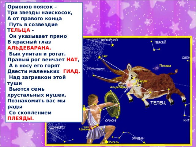 Орионов поясок – Три звезды наискосок, А от правого конца  Путь в созвездие Т ЕЛЬЦА -  Он указывает прямо В красный глаз АЛЬДЕБАРАНА.  Бык упитан и рогат. Правый рог венчает НАТ ,  А в носу его горят Двести маленьких ГИАД.  Над загривком этой туши  Вьются семь хрустальных мушек. Познакомить вас мы рады  Со скоплением ПЛЕЯДЫ.
