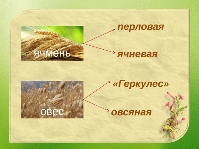 перловая ячмень ячневая «Геркулес» овес овсяная