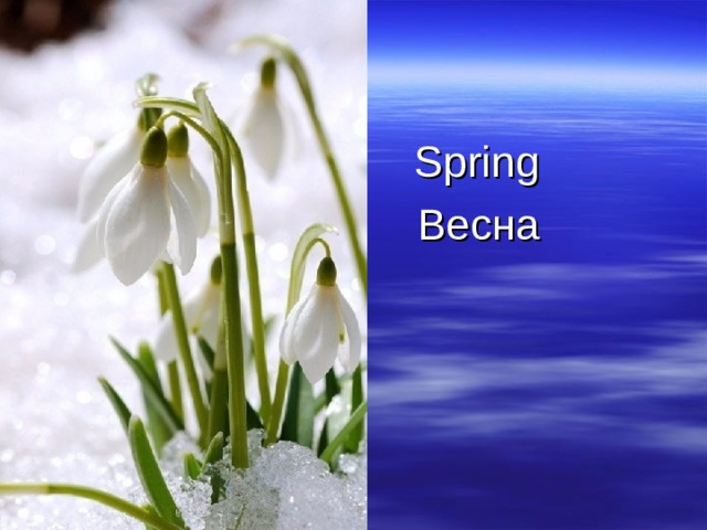 Spring  Весна