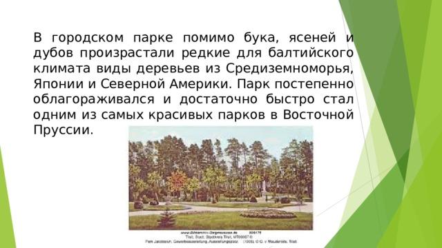 В городском парке помимо бука, ясеней и дубов произрастали редкие для балтийского климата виды деревьев из Средиземноморья, Японии и Северной Америки. Парк постепенно облагораживался и достаточно быстро стал одним из самых красивых парков в Восточной Пруссии.
