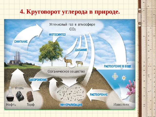 4. Круговорот углерода в природе.