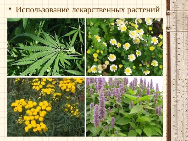Использование лекарственных растений